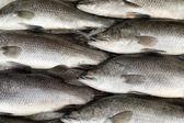 鮮魚市場で氷の上 — ストック写真