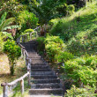 Stairway to jungle — Stock Photo