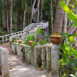 Royalty-Free Stock Photo: Walking bridge in the jungle