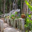 Walking bridge in the jungle — Stock Photo #20809871