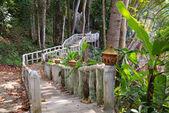 Walking bridge in the jungle — Stock Photo