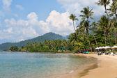 Spiaggia tropicale, palme — Foto Stock