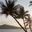 Silhouettes of palm trees at sunset — Stockfoto