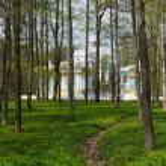 Pavilion in Catherine park in Tsarskoe Selo through the woods — Stock Photo