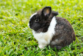 Bunny rabbit sits quietly on the lawn. — Stock Photo