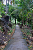 Paved footpath in the jungles — Stockfoto