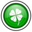 Four-leaf clover green glossy icon isolated on white background — Stock Photo