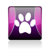 Animal footprint violet square web glossy icon — Stock Photo