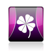 Four-leaf clover violet square web glossy icon — Stock Photo