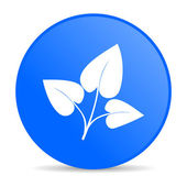эко синий круг веб глянцевой значок — Стоковое фото