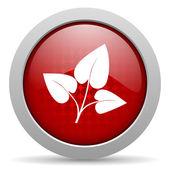 эко красный круг веб глянцевой значок — Стоковое фото