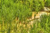 Huella en la arena con espuma — Foto de Stock