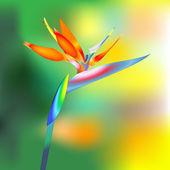 Fleur oiseau du paradis — Vecteur