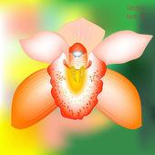 Orange orchid flower, vector — Stock Vector