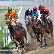 BELGRADE, SERBIA - JUN 16,2013:undefined group of Jockeys on Race Horses during race on Belgrade hippodrome — Stok fotoğraf