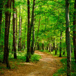 Path in beautiful beech forest near Rzeszow, Poland — 图库照片 #13591163