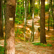 Path in beautiful beech forest near Rzeszow, Poland — Stock Photo