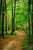 Path in beautiful beech forest near Rzeszow, Poland — Stock Photo