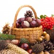 Wicker basket full of autumn acorns, cones and chestnuts — Stock Photo #13890434