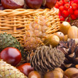 Wicker basket full of autumn acorns, cones and chestnuts — Stock Photo #13890574