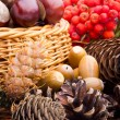 Wicker basket full of autumn acorns, cones and chestnuts — Stock Photo #13890678