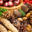 Wicker basket full of autumn acorns, cones and chestnuts — Stock Photo