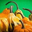 Several decorative pumpkins squash fruits — Stock Photo #19531061