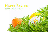 Decorative easter eggs in a grass — Stock Photo