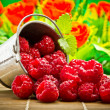 Delicious fruit berries in metal small pail — Stock Photo #29969495