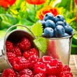 Delicious fruit berries in metal small pail — Stock Photo