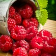 Delicious fruit berries in metal small pail — Stock Photo #32538499