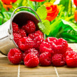 Delicious fruit berries in metal small pail — Stock Photo #32538707