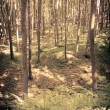 Mysterious dark forest near Rzeszow, Poland — 图库照片
