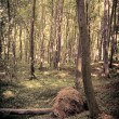 Mysterious dark forest near Rzeszow, Poland — Stock Photo #34900043