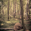 Mysterious dark forest near Rzeszow, Poland — Stockfoto