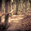 Mysterious dark forest near Rzeszow, Poland — Stock Photo