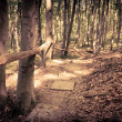 Mysterious dark forest near Rzeszow, Poland — Stock Photo #34900301