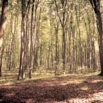 Mysterious dark forest near Rzeszow, Poland — Foto Stock