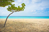 Beautiful beach in Aruba, Caribbean Islands, Lesser Antilles — Zdjęcie stockowe