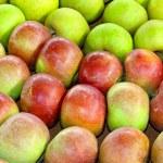 Постер, плакат: Apples variety