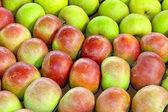 Apples variety — Stock Photo