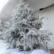 Snowy Christmas tree — Stock Photo