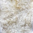 Stock Photo: Fur material