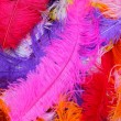 Feather fashion — Stock Photo