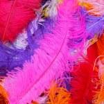 Feather fashion — Stock Photo