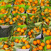 Kumquats — Stock Photo