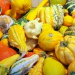 Decorative pumpkins — Foto de Stock