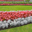 Flower park — Stock Photo #21625689