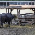Cattle farm — Stock Photo #24400359