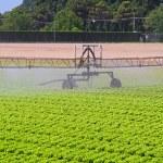 Water irrigation sprinkler — Stock Photo